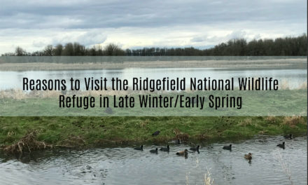 Reasons to Visit the Ridgefield National Wildlife Refuge in Late Winter/Early Spring